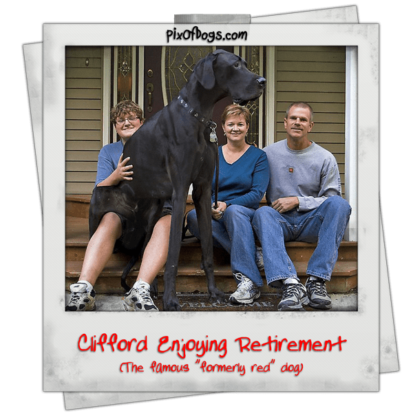 Pictures of Dogs - PixOfDogs.com - Happy 50th Birthday Clifford The Big Red Dog In Retirement